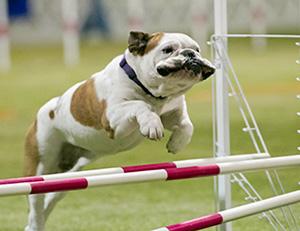 American Dog Show Judges