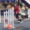 Day Two of the AKC Agility Invitational