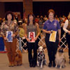 Non-Sporting Group - Pictured from left to right: 1st Place OTCH MACH2 Sanew's Abundance Of Energy UDX - Poodle - Shirley Barkan; 2nd Place CH Stonehills Ima Handsome Dude UDX RE AX OAJ - Dalmatian - Stephanie Podejko; 3rd Place CH OTCH MACH Keepsake Moonlight Serenade UDX3 - Keeshond - Margaret Bissell; 4th Place OTCH Montagues Vintage Sunrunner UDX2 - Dalmatian - Becky A. Luft