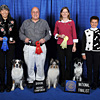 Herding Group - Pictured from left to right:  1st Place OTCH Navarro' s Runs with Scissors UDX11 RA - Australian Shepherd - Laurie Sasaki and Erin True; 2nd Place OTCH Skoof Making a Splash UDX5 - Shetland Sheepdog - Linda G. Lundgren and Charles J. Chmura; 3rd Place OTCH HC Rapideye Guess UDX - Border Collie - Chris and Jim Elliot; 4th Place CH OTCH Trumagik Step Aside UDX9 - Border Collie - Catherine Zinsky and Annemarie Silverton