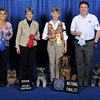 Terrier Group - Pictured from left to right: 1st Place Huntwood' s Four on the Floor UD - Norwich Terrier - Bridget Carlsen; 2nd Place Southcross Christmas Star UDX2 RA - Miniature Schnauzer - Louise Botko; 3rd Place CH Brisline Plumperfect Unforgettable UD RA - Airedale Terrier - Suzanne Tharpe and Georgia McRae; 4th Place OTCH Sheldon' s Little Shadow UDX3 RE NA NAJ - Miniature Schnauzer - Patricia and Sheldon Smith