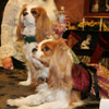 AKC Meet the Breeds: Cavalier King Charles Spaniels