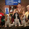 AKC Meet the Breeds - Cavalier King Charles Spaniels