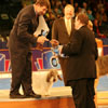 Awarding the Hound Group winner: Petit Basset Griffon Vendeen