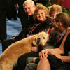 Ringside at the AKC/Eukanuba National Championship