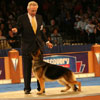 Herding Group winner - German Shepherd Dog