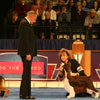 Best in Show judging - English Springer Spaniel