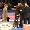 Handlers congratulate the Best in Show winner