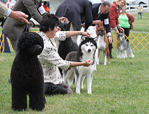 American Kennel Club - Events